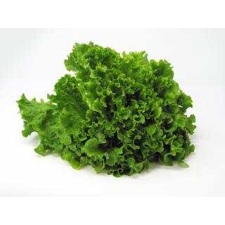 Salat, Batavia grün