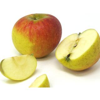 """Äpfel - """"Knebusch"""""""