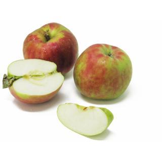 """Äpfel - """"Ribston Pepping"""""""