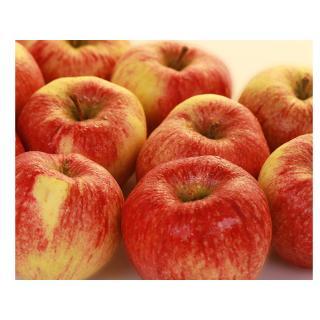 """Äpfel - """"Altländer Pfannkuchenapfel"""""""