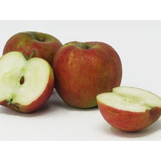 Äpfel - Biesterfelder Renette 2,5kg Kiste