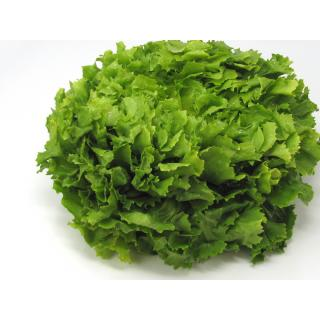 Salat, Frisee-Endivie