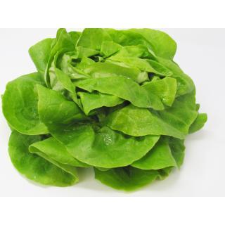 Salat, Kopfsalat grün
