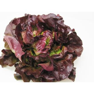Salat, Kopfsalat rot