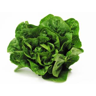 Salat, Römersalat, Mini