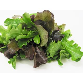 Schnittsalat Mix - bunt