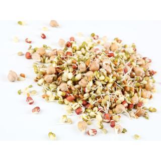 Sprossen - Gourmet Mix Schale 80g*