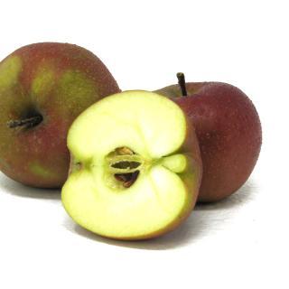 """Äpfel - """"Roter Boskoop"""""""