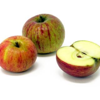 """Äpfel - """"Cox Orange"""" - 2,5kg Kiste"""