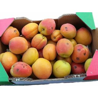 Aprikosen für Marmelade - 2kg Kiste