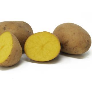 Kartoffeln festk.- Übergrößen lose