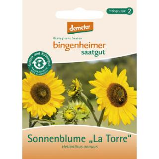 Sonnenblume La torre, Saatgut