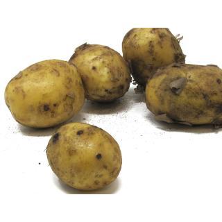Frühkartoffel Glorietta - 2,5kg
