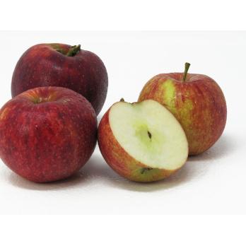 """Äpfel - """"Royal Rouge"""""""